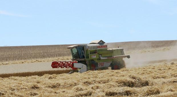 Rosja: Ministerstwo rolnictwa obniża prognozę produkcji zbóż