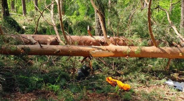 Padające drzewo zabiło pracownicę Zakładu Usług Leśnych