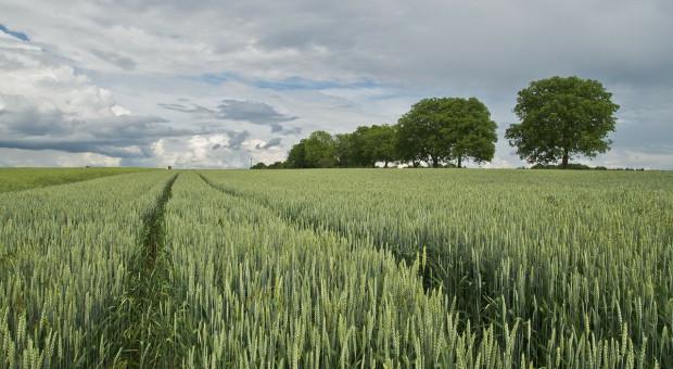 Niemcy: Powierzchnia uprawy najważniejszych gatunków roślin pod zbiory w 2020 r.