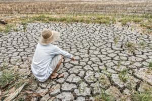 Ardanowski: 10 proc. rolników musi poczekać na wypłatę środków suszowych do nowelizacji budżetu