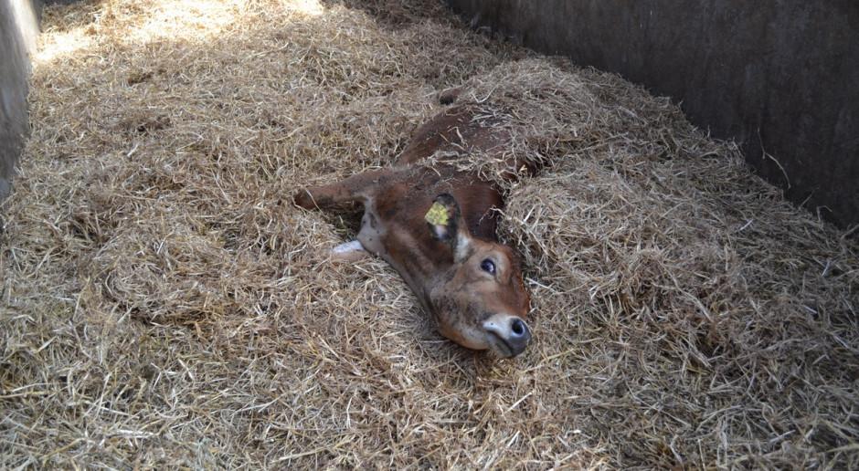 Ubezpieczenia od padnięcia zwierząt - nadal bez zmian