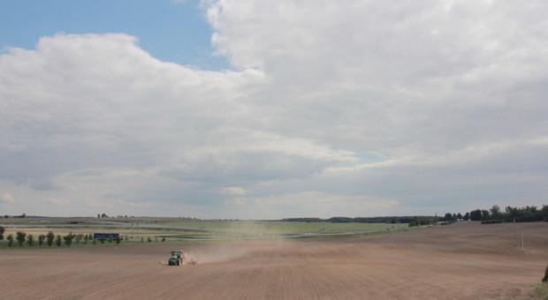 Niemcy pracują nad zwiększeniem tolerancji pszenicy na suszę