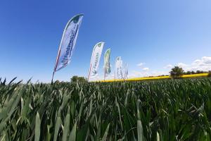 Innvigo: Kłosy pszenicy dobrze ochronione