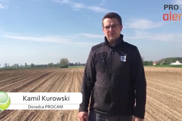 Zaczynają się wschody kukurydzy, co zatem należy zrobić, aby osiągnąć jak najlepszy plon?