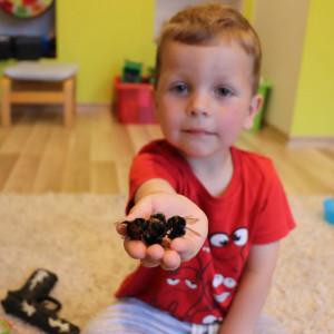 Marcel z dumą prezentuje garść trzmieli, które udało się znaleźć w ogrodzie w zeszłym sezonie. fot. Tomasz Kuchta