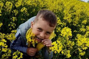 Rzepak to ulubiona roślina braci, zdaniem Tymka będzie często gościła w płodozmianie. fot. archiwum rodzinne
