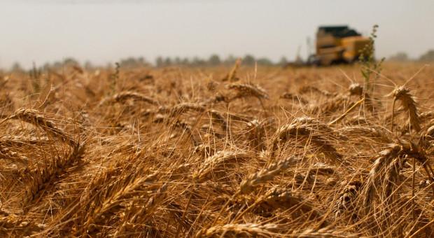IGC: Prognoza większej światowej produkcji zbóż w kończącym się i nowym sezonie