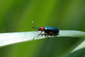 Feromonowe insektycydy z Cortevy
