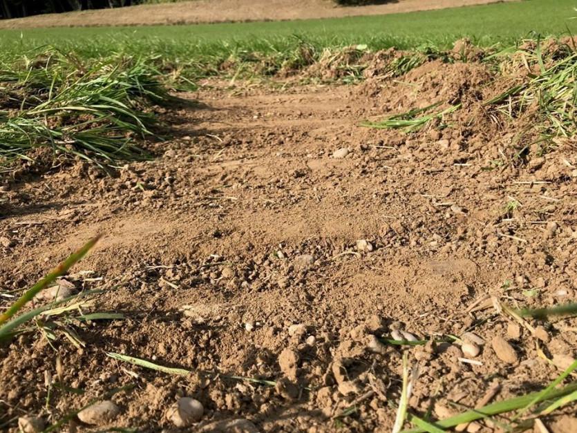 Efekt pełnego podcięcia jest bardzo ważny, kiedy chcemy zniszczyć rośliny znajdujące się na polu.
