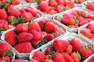 Złodzieje grasują na plantacjach truskawek