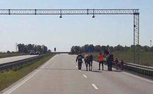 Policjanci i strażacy ruszyli na ratunek spłoszonym koniom, które znalazły się na autostradzie