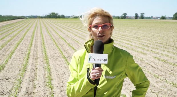 Dni pola on-line: Plantacje chronione na czas są zdrowe