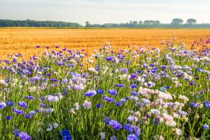 UE robi krok w kierunku zwiększenia bioróżnorodności i ochrony obszarów przyrodniczych