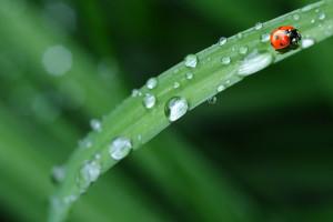 Zielony Ład: nadchodzą dobre czasy dla ekorolnictwa!