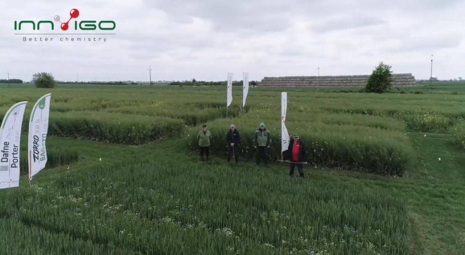 Chlewiska - zaproszenie na Wirtualne Dni Pola z INNVIGO