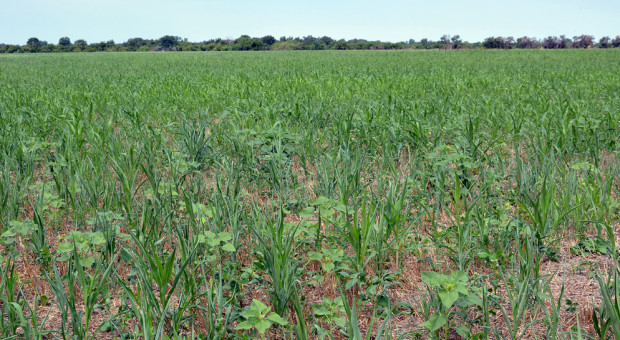 Kansas: No-till sposobem na poprawę produktywności gleby