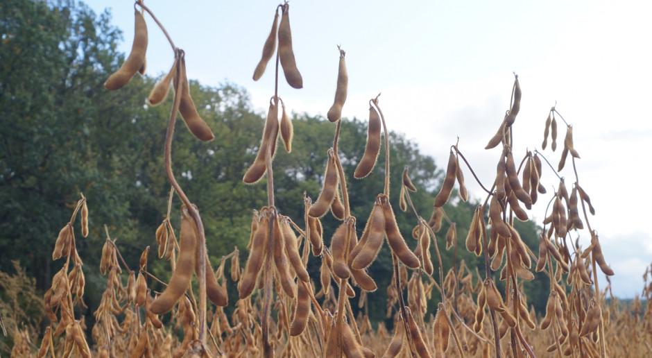 USDA: Prognoza dla światowego rynku nasion oleistych