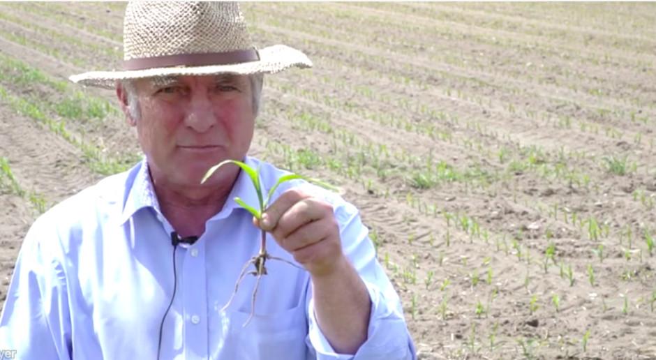 Dni Pola On-Line: Kukurydza spóźniona, ale nie stracona