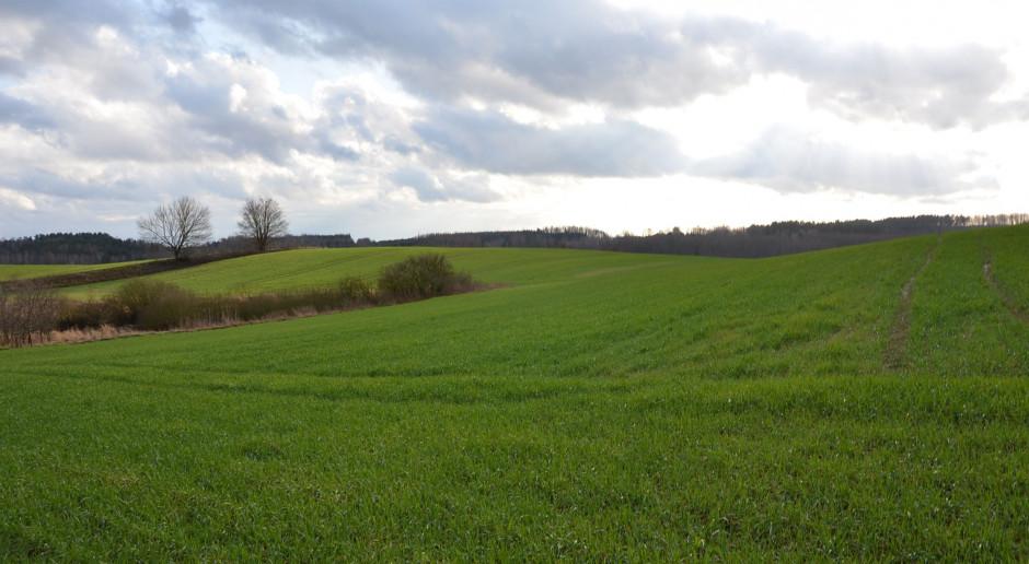 Ukraińskie ministerstwo rolnictwa skupi się na rynku ziemi, eksporcie i bioasekuracji