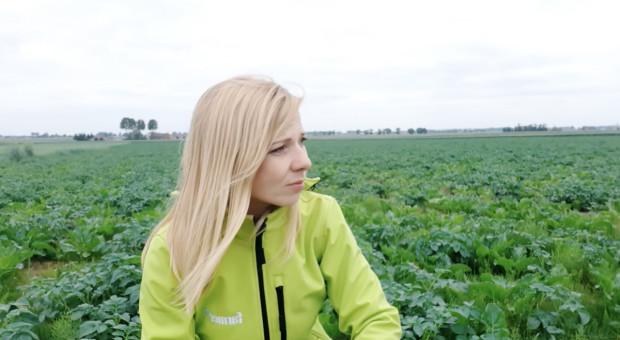 Samosiewy ziemniaka i buraka utrapieniem wielu upraw