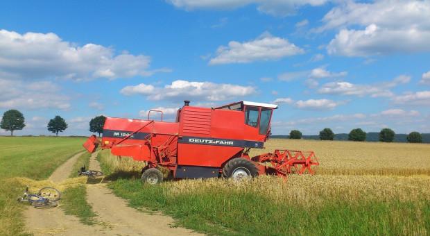 Rosja: Eksperci - tylko niewielki wzrost produkcji pszenicy w 2020 r.