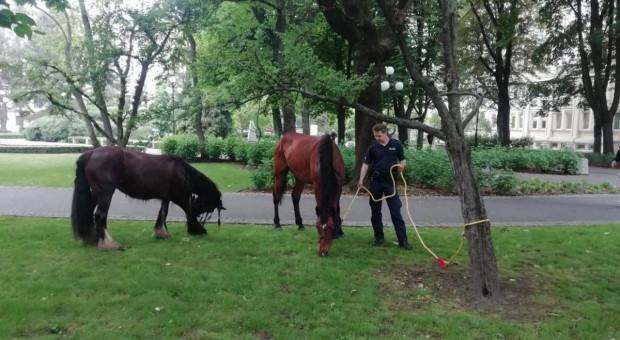 Policjanci i strażnicy zatrzymali konie biegnące przez centrum miasta