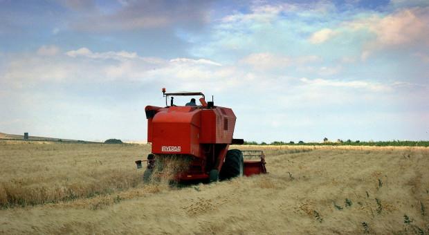 USDA: Prognozy większej produkcji pszenicy i zbóż paszowych w sezonie 2020/2021