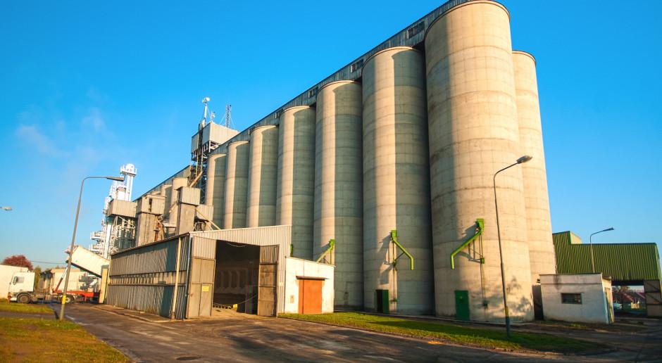 W skupach nadal niskie ceny zbóż – szczególnie żyta