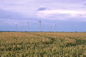 Szwecja: Ilość gruntów uprawianych ekologicznie rośnie wolniej