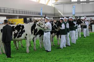 Jak środowisko rolnicze postrzega nowe stanowisko pełnomocnika ds. ochrony zwierząt?
