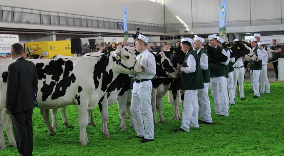Nie będzie największej imprezy dla hodowców bydła w 2021 r.