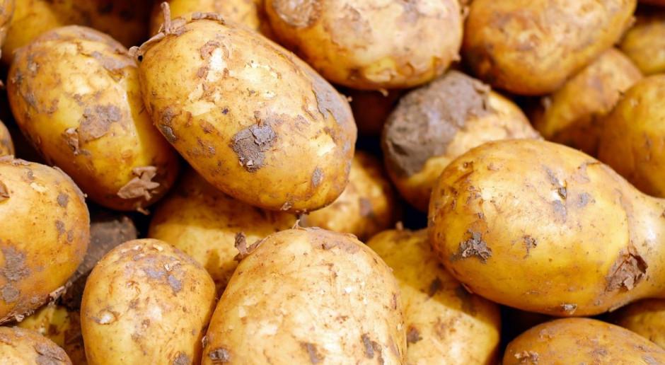 Polskie wczesne ziemniaki prosto z… Rumunii