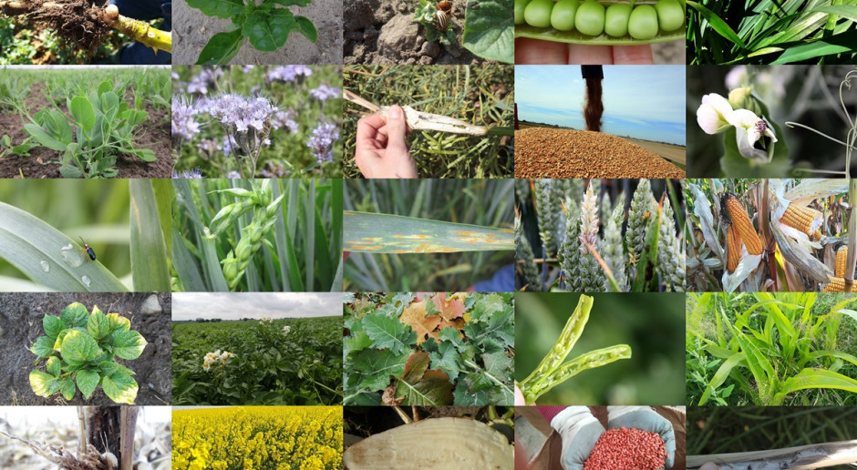 Komunikaty fitosanitarne w jednym miejscu