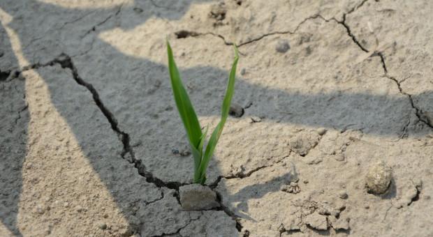 Nadal brakuje wody w glebie na Zachodzie