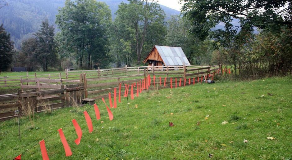 Pistolety i fladry dla obrony stad i pasiek przed drapieżnikami na Śląsku