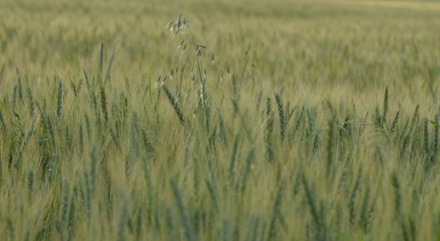 10 zasad zapobiegania odporności na herbicydy