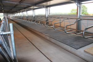 Maty gumowe, szczególnie zniższej półki, zapewniają stosunkowo niski komfort ihigienę legowiska