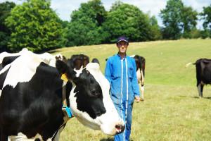 Detekcja rui podstawą sukcesu wrozrodzie bydła
