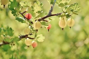 Niskie ceny skupu owoców miękkich, ale wysokie w dalszej sprzedaży
