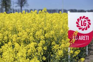 Odmiany rzepaku odporne nawirusa żółtaczki rzepy