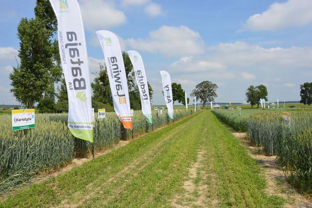 Nowe odmiany zbóż ozimych HR Danko