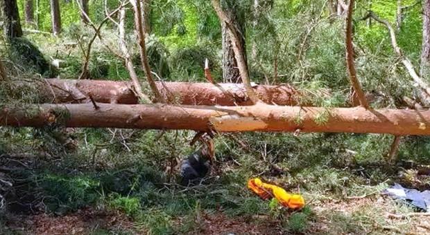 Tragedia przy wycince drzew – pijany traktorzysta z zarzutami