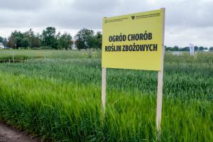 Kolekcja chorób zbóż w  Minikowie