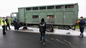Inspektorom transportu i weterynarii w kontroli towarzyszyli obrońcy zwierząt, Foto: WITD Opole