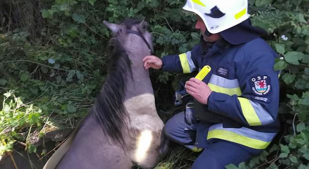 Strażacy wyciągnęli konia ze studni gołymi rękami
