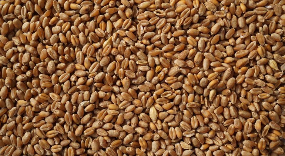 Ceny zboża podyktuje w tym roku Platforma Żywnościowa