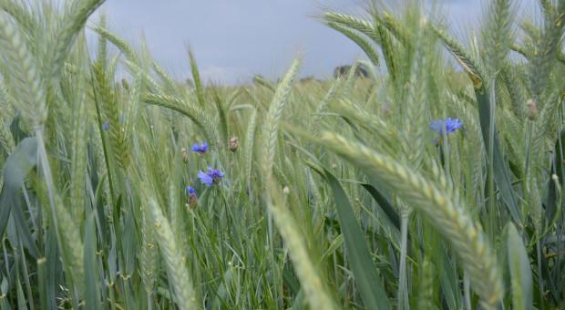 Przyszłość rolnictwa w strategii Od pola do stołu i Zielony Ład