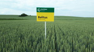 Balitus