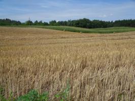 5 t słomy pszenicy dostarcza do gleby średnio: 32 kg N; 5,5 kg P2O5; 58,5 kg K2O; 4,5 kg MgO; 13,5 kg CaO oraz mikroelementy. W słomie pszenicy jest ok. 34 proc. celulozy, 22 proc. hemicelulozy i ok. 21 proc. ligniny, zatem zawiera ona wiele składników łatwo ulegających rozkładowi, pod warunkiem, że drobnoustroje mają w środowisku dostateczną ilość azotu i fosforu