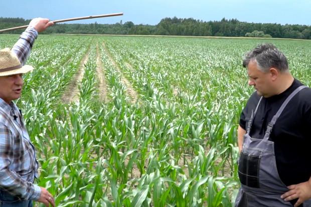 """Dni Pola """"Farmera"""" – jakie niedobory w kukurydzy?"""